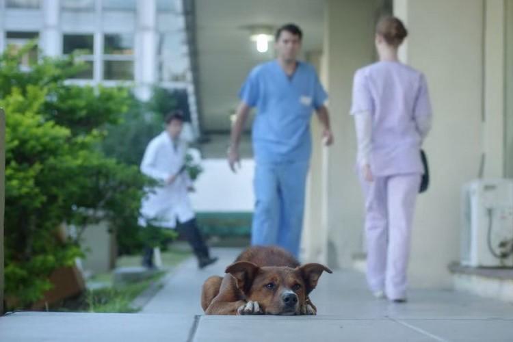 救急車で運ばれたおじいさんを待ち続ける1匹の犬。ラストシーンが心に響く