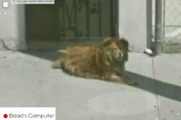【感動】Googleストリートビューで見つけた1匹の犬。実は10年もその場所で飼い主を待ち続けていた