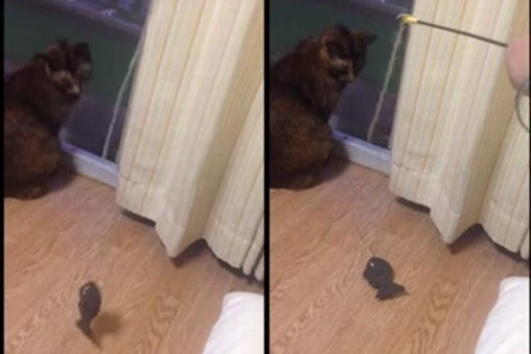 「そっちかよ!」おもちゃに飛びつく猫に思わずつっこんだ