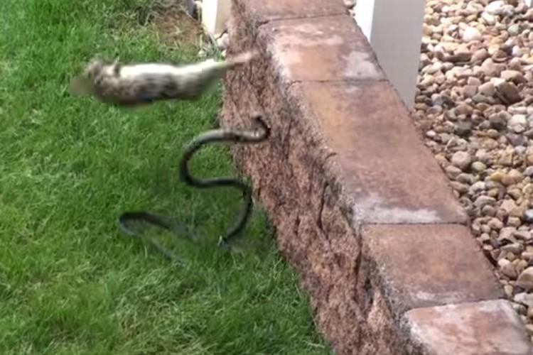 【母は強し】子どもをヘビに襲われた母ウサギが決死の覚悟で撃退