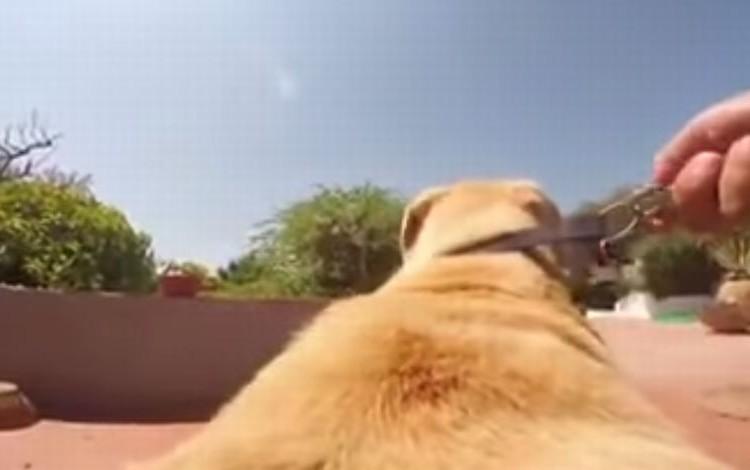 カメラを取り付けた犬が全力ダッシュで向かった先とは?