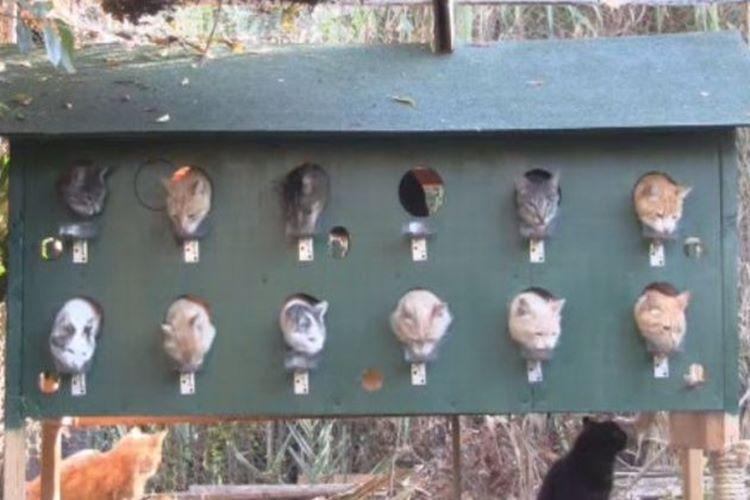 猫たちがケンカしないで仲良く食べられるアイディアが秀逸。