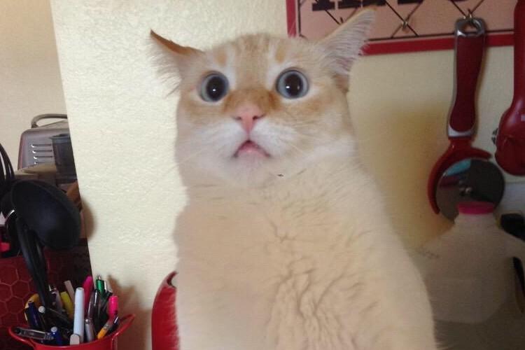 人間が猫に「ニャ~!」と鳴き返したらこんな顔をされた