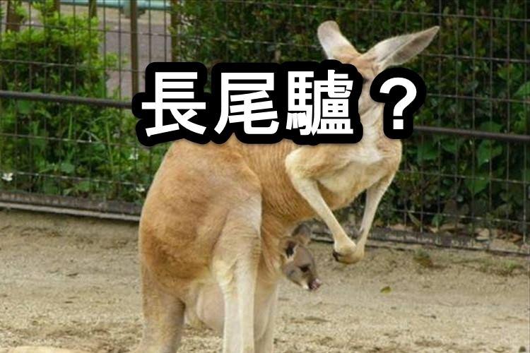 【読みが難しい動物の漢字】あなたはいくつ読めますか?
