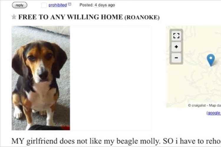 「彼女が、僕の愛犬を嫌いだと言うので譲ります」…この身勝手な広告の真意とは