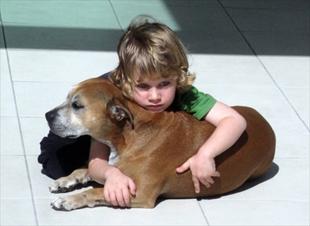 A-Dogs-Purpose-Imgur_R_R