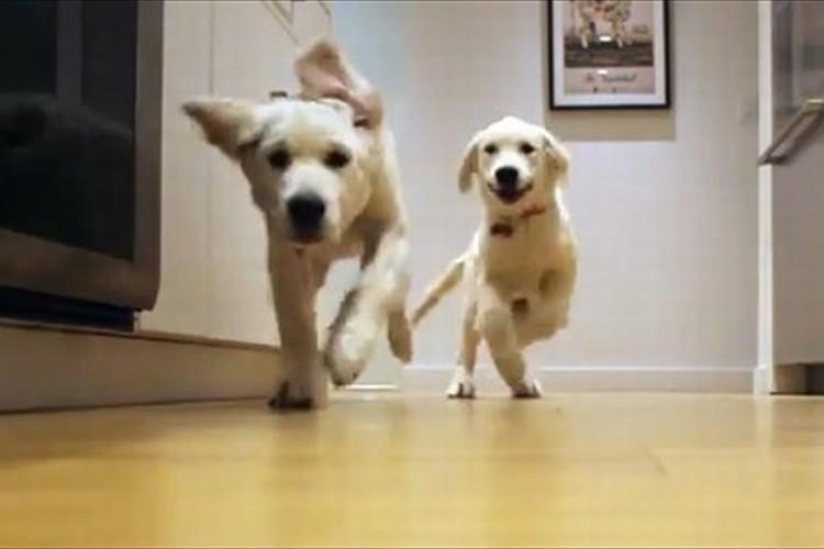 最初は滑って転んでたけど…走って角を曲がる犬のスキルがどんどん上達!
