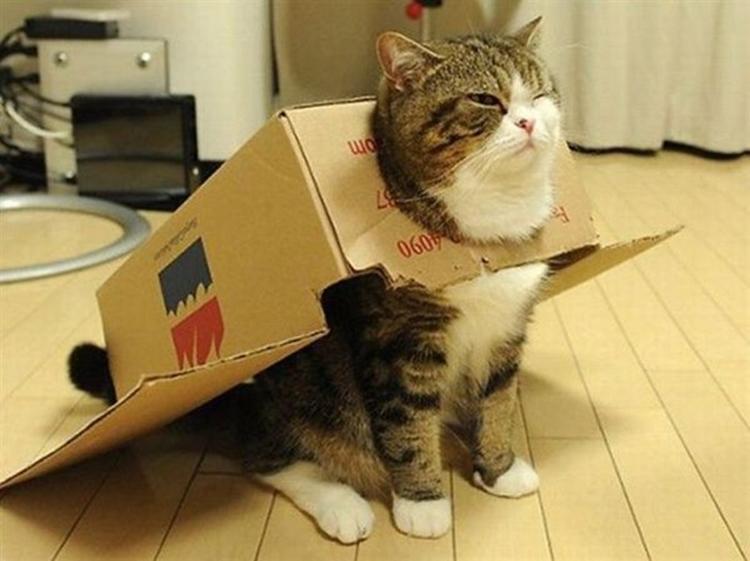 「分かってニャイの?」猫が鳴き声をあげる10の理由!