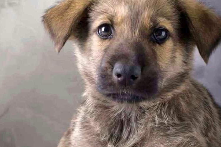 愛犬の遺言「もし、ボクが死んだら」に絶対に涙してしまう