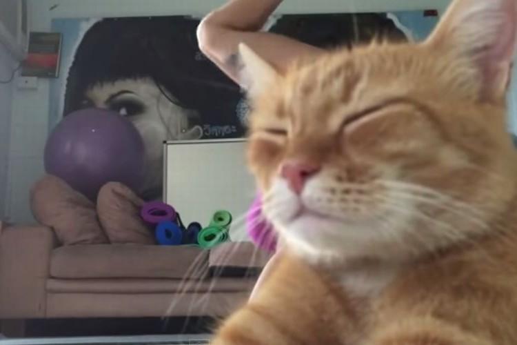 わざと!?ヨガのナイスポーズを邪魔する猫さん