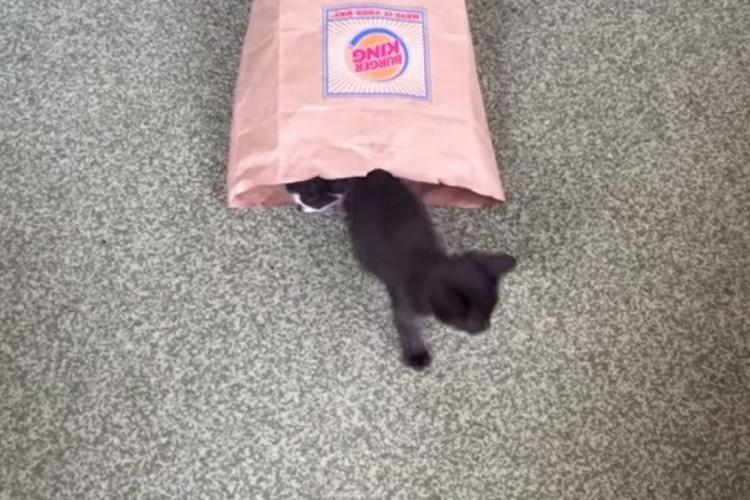【不思議な紙袋】紙袋の中から猫が1匹...2匹...3匹...えっ!そんなにいるの?