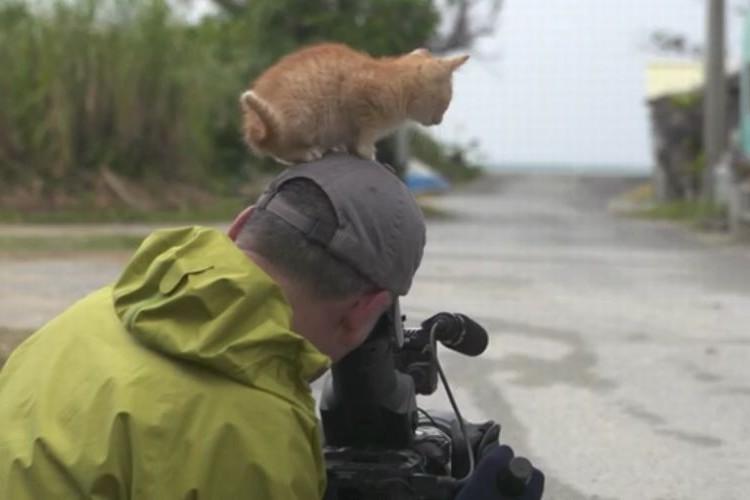 「かわいい猫を撮るぞ!」と思ったら本人の真上にいた