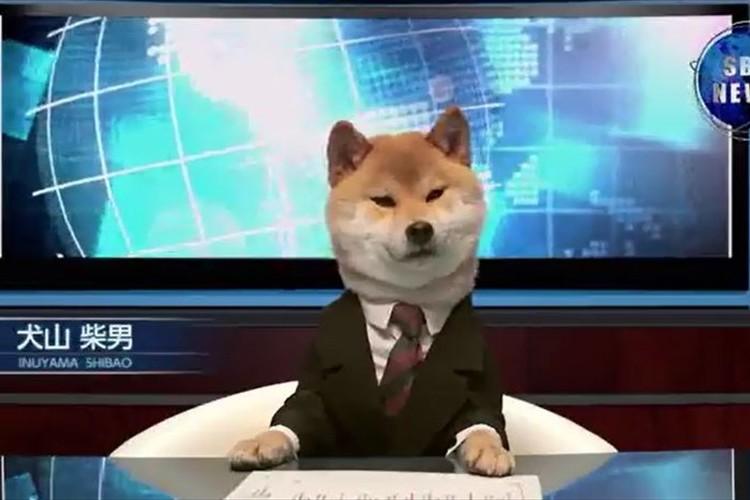 【爆笑】柴犬がキャスターを務めるニュース番組が、自由過ぎて笑える!