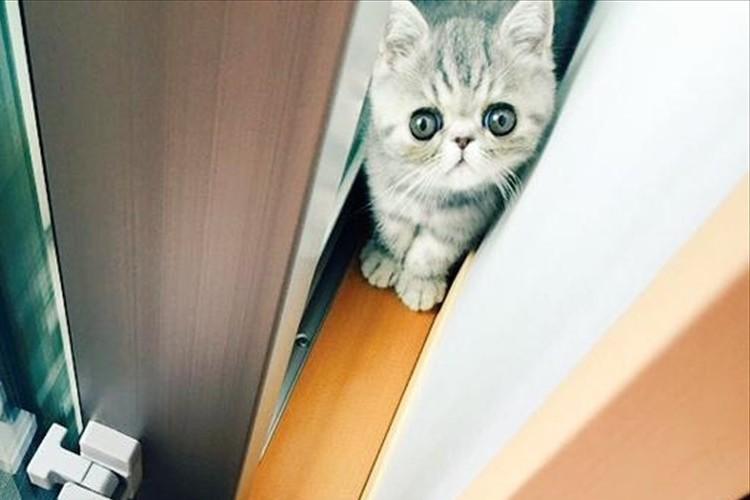 お兄さん猫に出口をふさがれて困惑する妹猫…無事に出られたの!?