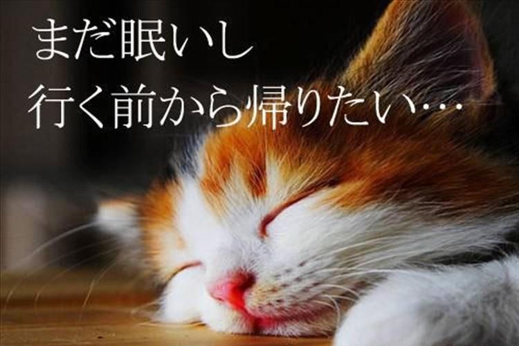 【ますます話題沸騰!】「全日本もう帰りたい協会」の嘆きに共感と爆笑!
