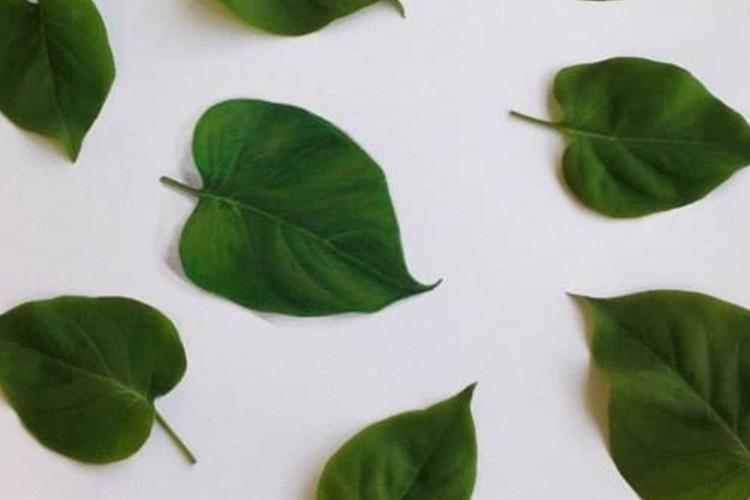 見分けられますか?イラストで描いた葉っぱが1枚だけ隠れています。