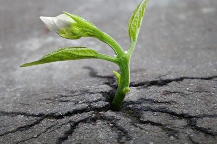 【生きる強さ】植物のたくましい生命力を思い知らされる画像集