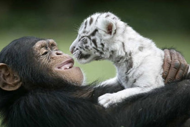 """異なる動物同士の""""とっても仲睦まじいシーン""""が微笑ましい♪【画像】"""