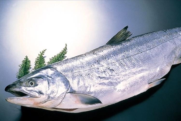 """【近年、美容業界が注目】鮭の鼻にある""""ヒアルロン酸よりも優れたうるおい成分"""""""
