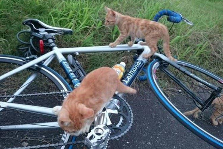 ロードバイクに興味津々!?可愛いニャンコが群がる光景が話題
