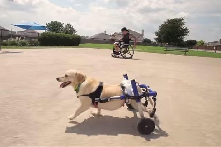 """【共に生きていく】""""足の不自由な犬""""を殺処分寸前で引き取った車椅子の男性"""
