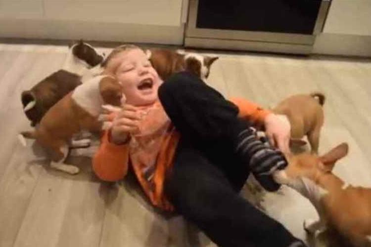 こっ、これは!愛犬家にはたまらない 『16匹の子犬との愉快な暮らし』