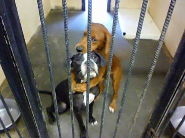 shelter-dogs-hug-photo-viral-save-life-euthanasia-kala-keira-angels-among-us-4r