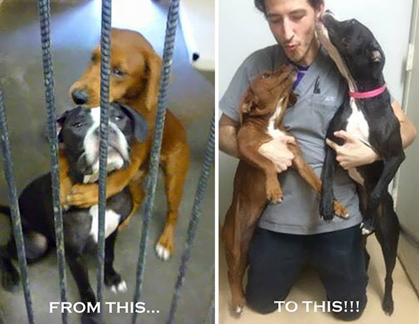 shelter-dogs-hug-photo-viral-save-life-euthanasia-kala-keira-angels-among-us-5r