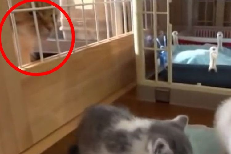 うらやましい...子猫たちの食事を見つめる大人猫が次の瞬間とった行動とは