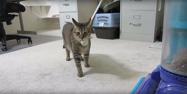 cat-feeder-makes-cat-hunt-for-food-ben-millam-4r