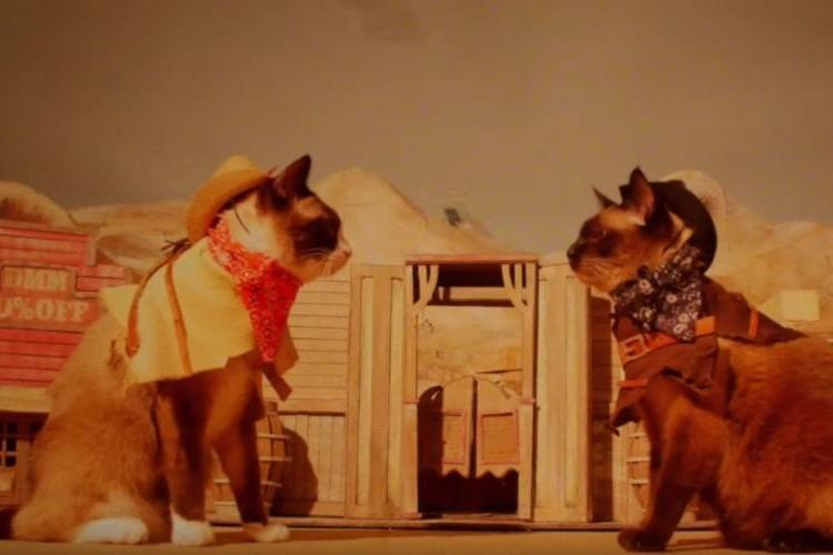 【自由気まま】ネコ主演のウエスタン映画で演技をさせてみたら予想通りのオチになった