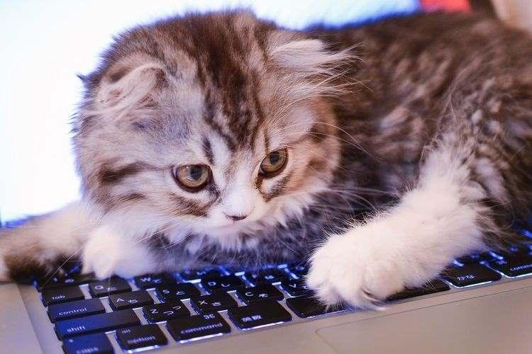 心理テストです。猫カフェにやってきたアナタに1番なついたネコは?