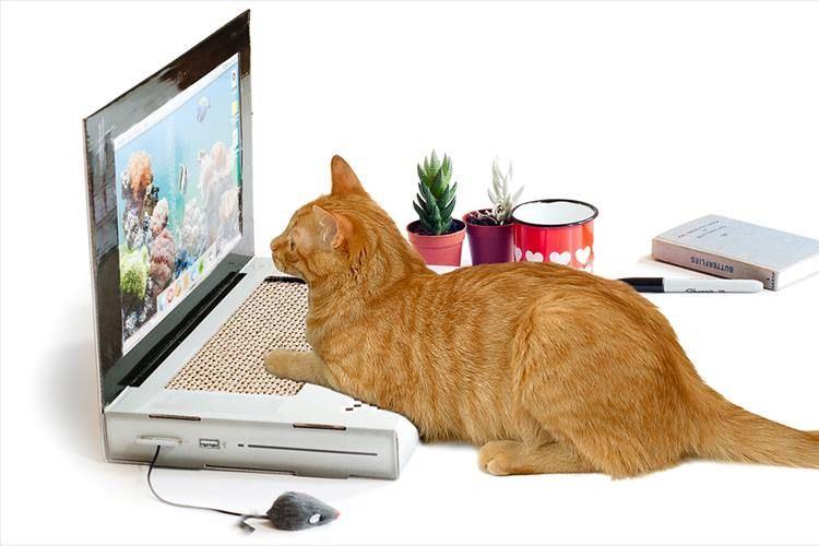 全国のネコたちに朗報!イギリスでネコ専用のノートパソコンが発売されたニャ