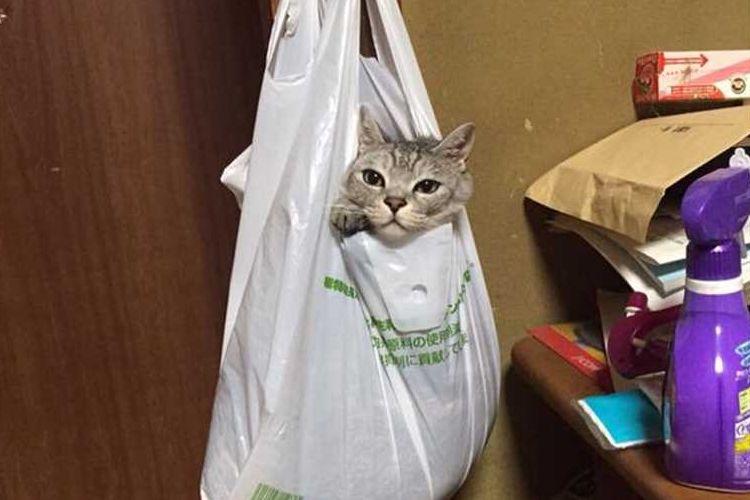 「意外と落ち着くニャ~」ビニール袋でリラックスするネコがカワイイと話題に