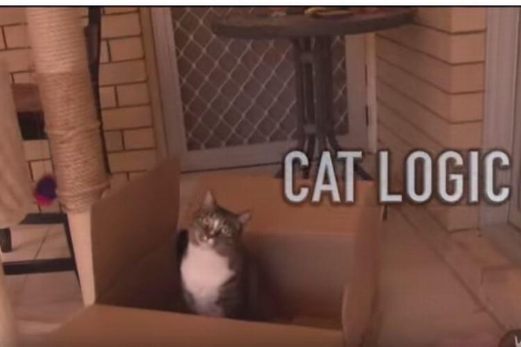 猫って飼い主の想いを平気で踏みにじるけど、そこが好きなんだよな