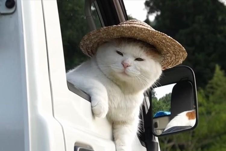 """""""軽トラックでひと息つく猫""""が、オッサンにしか見えない"""