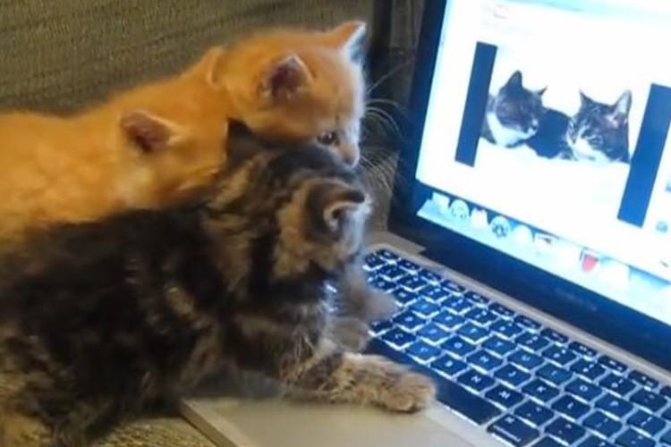 大人の猫が会話する姿を見て、子猫たちが起こした行動とは!?