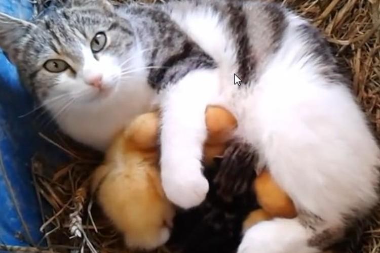 """私の子どもたちに手を出さないで!子猫と""""3匹のヒナ""""を守る母猫の強い愛"""