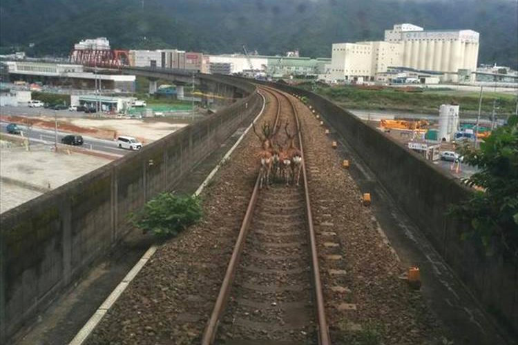 """「鹿がいて三陸鉄道が進めない!」1枚の画像が""""あの映画みたい""""と話題に!"""