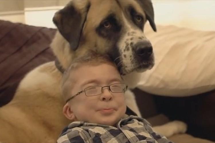 片方の後ろ足としっぽを失った犬が、難病を患う少年の人生を劇的に変えた