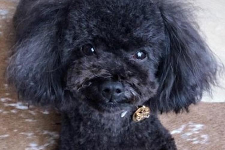 迷子犬発見アプリ「FINDOG」で本当に迷子犬が見つかった!と話題に