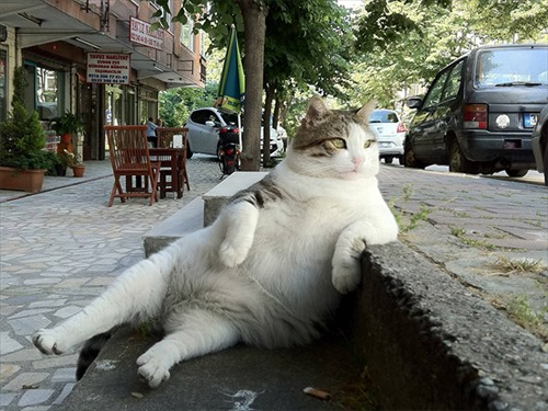 sitting-cat1_R