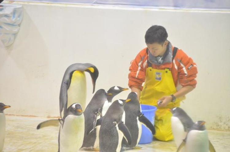 """餌を貰えなかったペンギンさんの""""がっかり感""""がハンパない"""