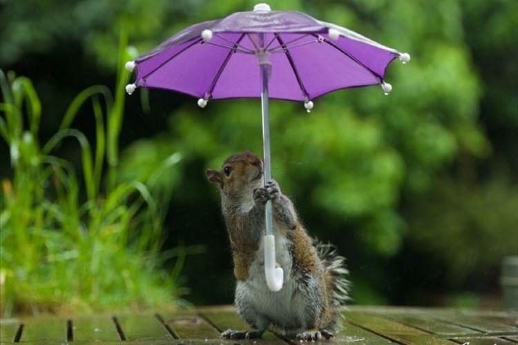 まるで人間みたい!傘をさして雨風をしのぐ姿がとってもカワイイ動物たち