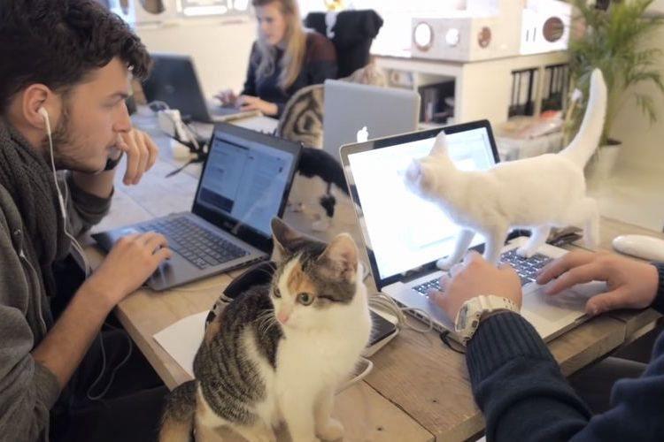 思わず転職したくなる?ネコ好きには天国のようなオフィスが話題に
