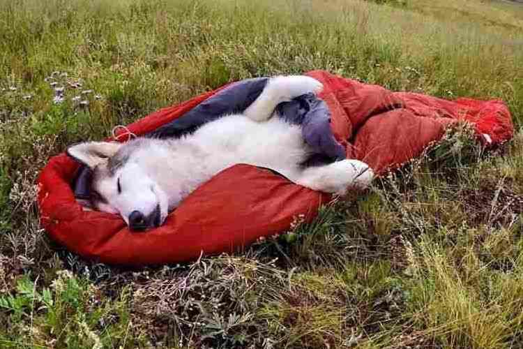 寝袋が気持ちいいワン♪まるで人間のようにキャンプを楽しむワンコたちにキュンとくる
