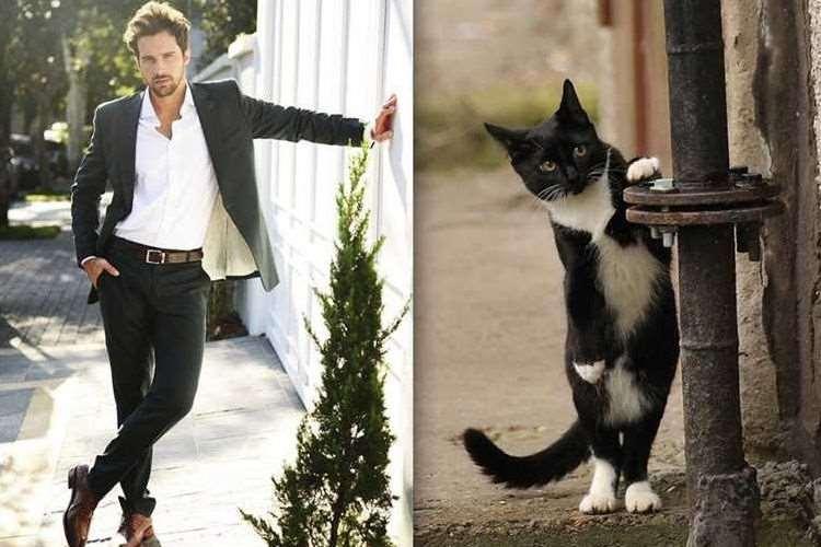 イケメンとネコどっちが魅力的?同じポーズをとった比較画像14枚