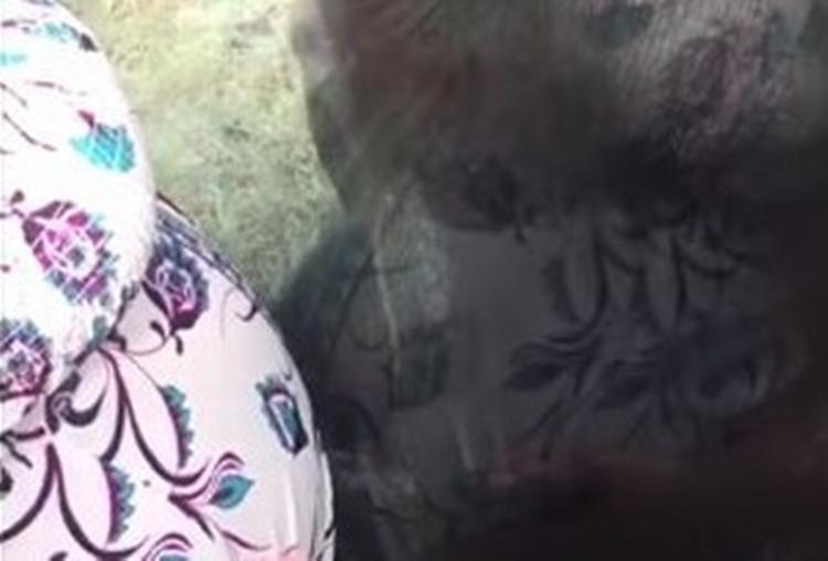 「わぁ赤ちゃんだ!」妊婦の大きなお腹にオランウータンが優しくキス