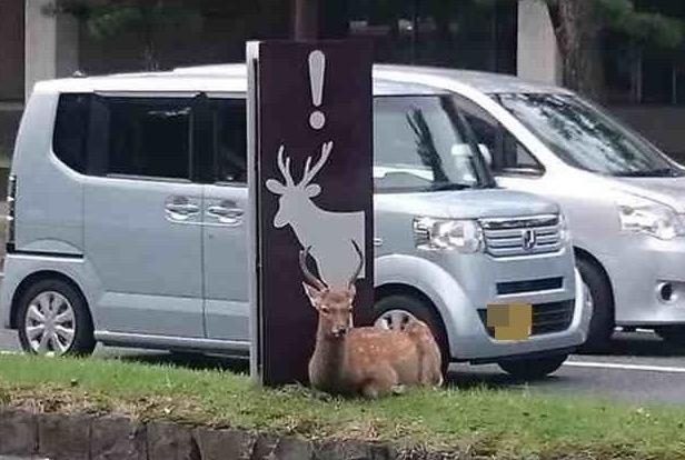 「鹿に注意」の標識の下にすわって自ら注意を喚起する鹿が話題に!