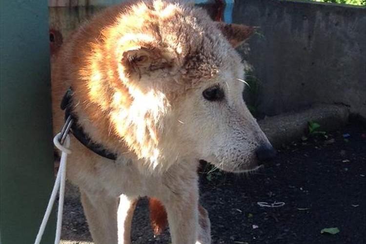"""「命をつなぐSNSの力」""""台風で川に流されていた犬""""飼い主が見つかる"""